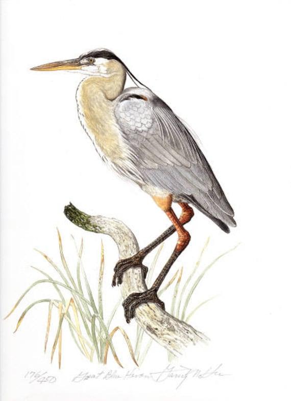Watercolor artwork signed Blue Heron Birds Handmade painting Illustration wall