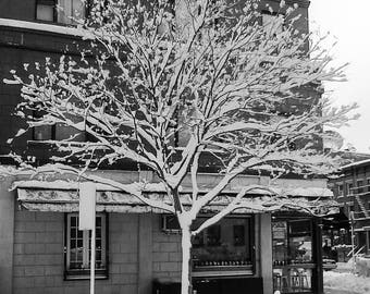 Snow Covered Tree, Black and White Print, New York City, NYC, Wall Art