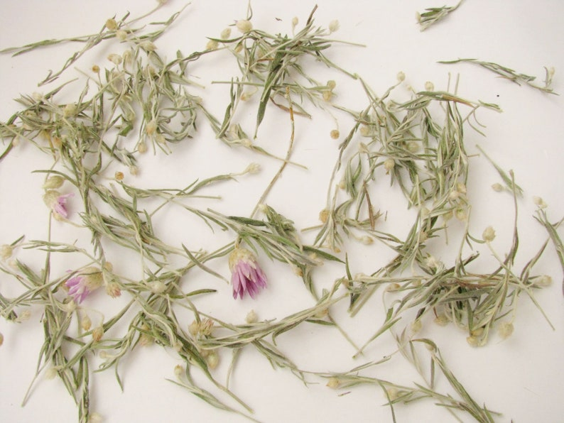 Dried immortele flowers Tiny Everlasting buds with stem Floral crafts supply 3D Invitation supply Bunch of Dried Wild Helichrysum