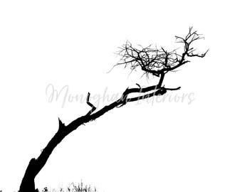 Isolated Tree - DIGITAL DOWNLOAD