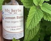 Lemon Balm (FRESH Organic plant) tincture, Melissa officinalis