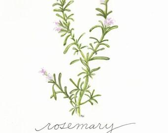 Rosemary, 8x10