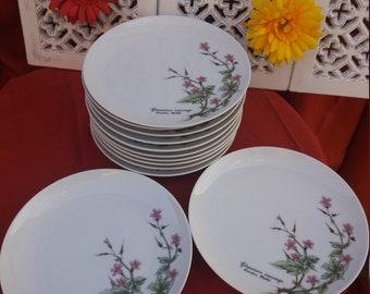 12 creation Mobil winterling bavaria dessert plates