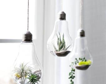 3 Hanging Terrarium Bulbs, Hanging Planter, Succulent Planter, Air Plant Holder, Tea Light Holder, Succulent Pots, Wall Planter, Air Plants
