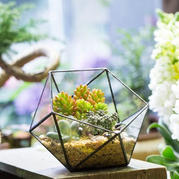 Succulent Glass Terrarium Etsy