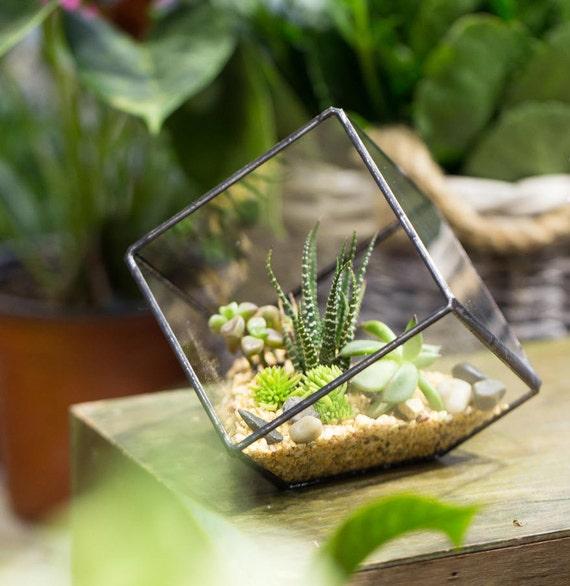Succulent Cube Glass Box Geometric Terrarium Glass Etsy