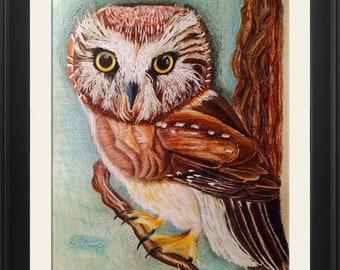 Sawhet Owl ORIGINAL