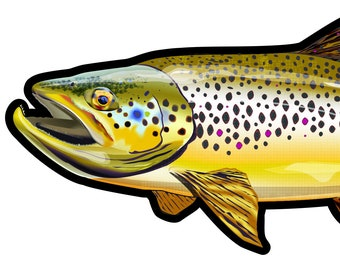 """Wild Brown Trout, Trout Fishing, Fishing Art, Die-cut Bumper Sticker/Decal 7.5"""" x 3.25"""" UV Coated Inks By FishWear Designs"""