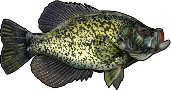 Yellow Perch Decals Bumper Stickers Right Left Face Gifts Fishing Men Boys Fish