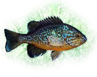 The Pumpkinseed Panfish Painting