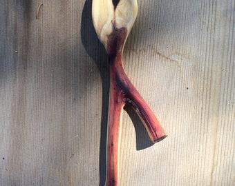 Handmade Rocky Mountain Juniper Spoon
