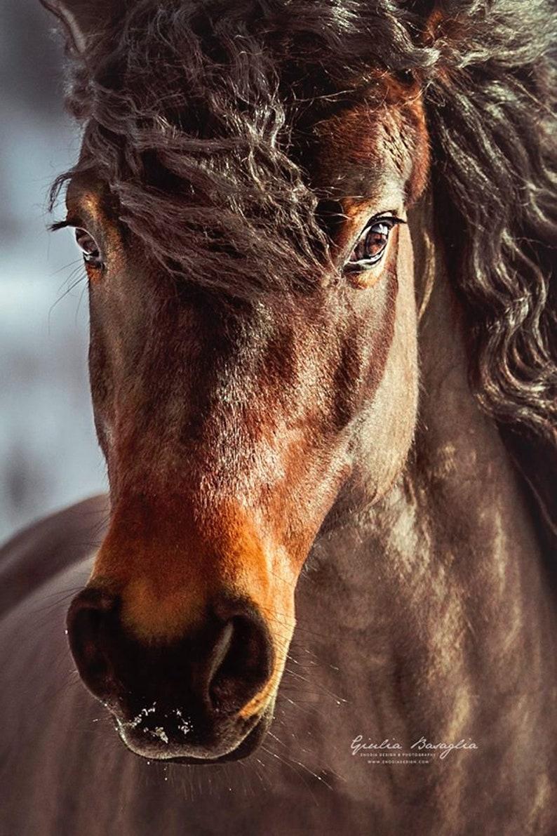 Bardigiano horse professional color print | Etsy