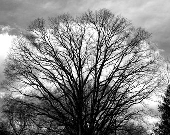 digital download, nature, tree, woodlands, farm, field, black and white, home decor