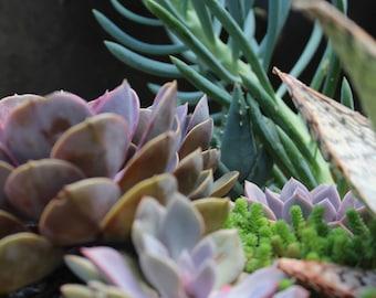 Multi-Color Succulents Close-Up Print