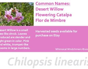 Seeds: Desert Willow (Chilopsis linearis)