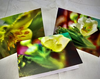 Strawberry Triple Creme -- AgathaO Nature Card and Print set