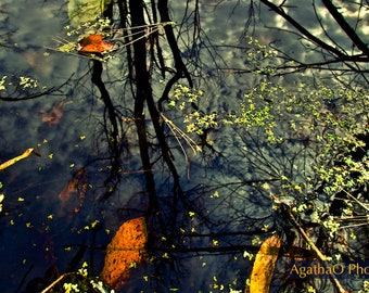 Floating Leaves -- Nature Greeting Card and Print -- Photography by AgathaO