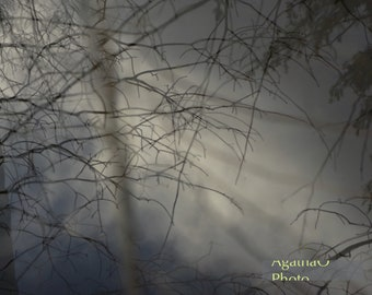 Foggy Morn-- Nature Greeting Card and Print Photography by AgathaO --
