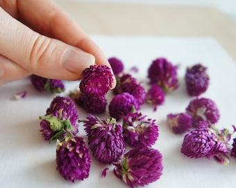 Purple Dried Flowers Globe Amaranth for Crafts