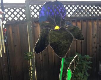 Purple Iris Sunctcher