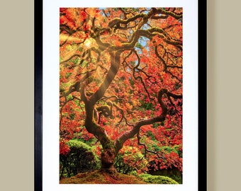 Japanese maple fine art landscape photography