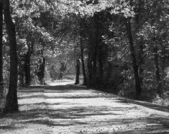 Nature, Black and White Downloadable Photography Art
