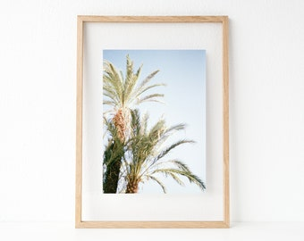"Travel photography ""Palm trees"" 