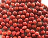 Seeds village Adenanthera Pavonina Coral Wood Tree Acacia Manchadi Red Lucky Seeds Circassian Bean for Sowing Growing, 500 g