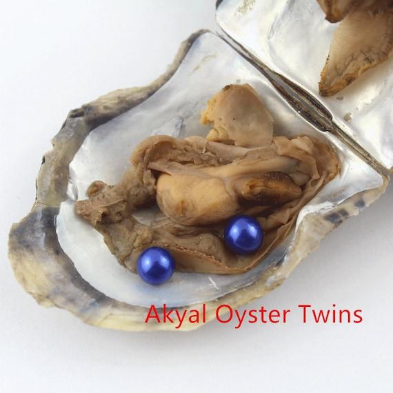 Akoya Pearl Oysters  Pearl 6-8mm Freshwater Vacuum Packaging UK SELLER