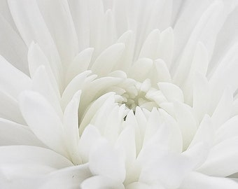 Bright white dalia macro  flower photograph