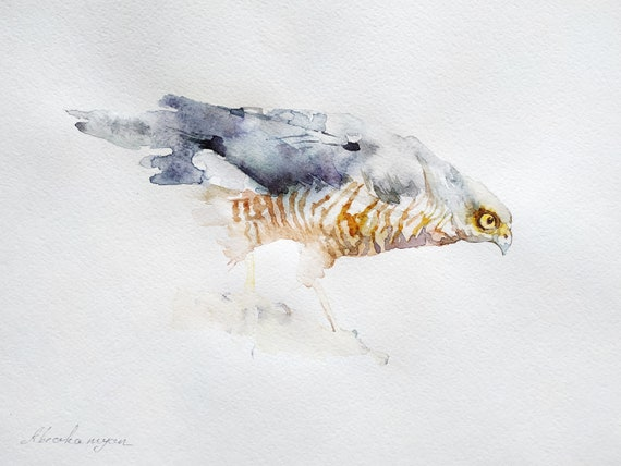 Illustration wall Handmade painting Watercolor artwork Birds Hawk signed