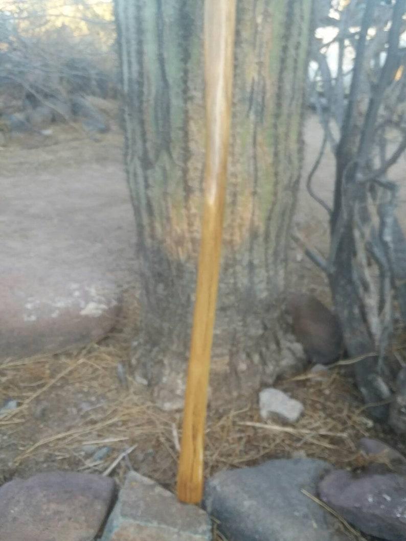 walking stickcane. Saguaro cactus wood