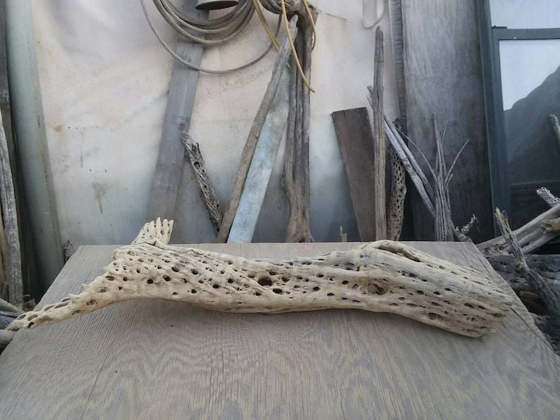 thick cholla cactus wood,. Large