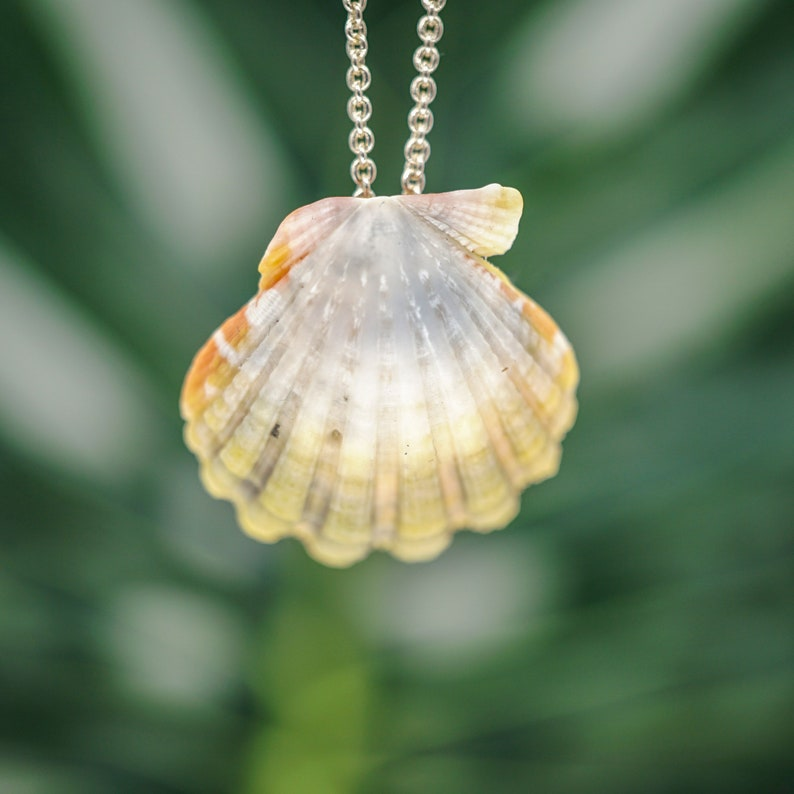 Moonrise Shell Necklace Sunrise Shell Jewelry Beach Lovers image 0