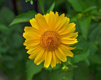 Nature photography, Floral photography, Wonderful gift, Photo print
