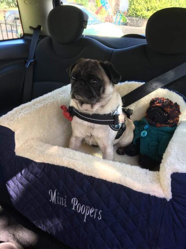 Medium Bloumers Dog Car Seat Bespoke Hand Made Safe Secure