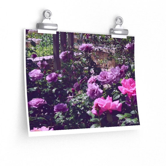 Dreaming Of Summer High Quality Print; Photography Print; Poster; High Quality Mate Finish Print