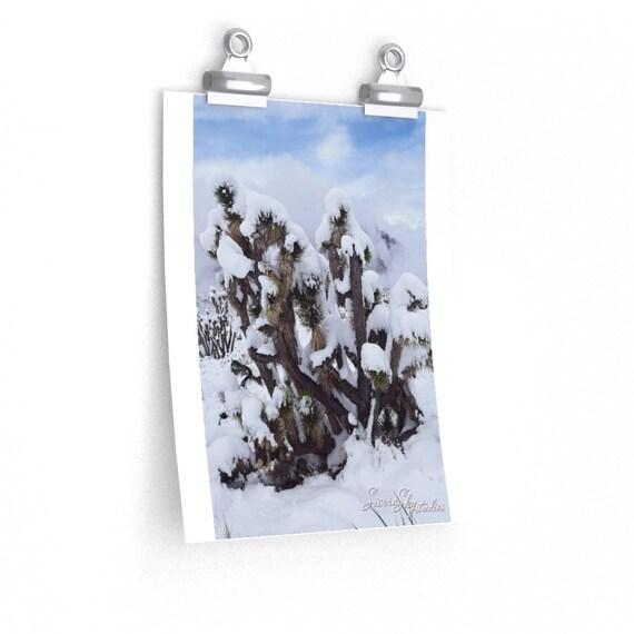 Snowed Joshua Tree High Quality Print; Photography Print; Poster; High Quality Mate Finish Print