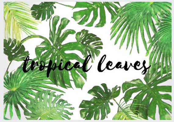Tropical Leaves Transparent Png File Etsy Download free png of hand drawn tropical leaves on a white background transparent png by donlaya about frame, greenery, leaf, frame png and leave. tropical leaves transparent png file