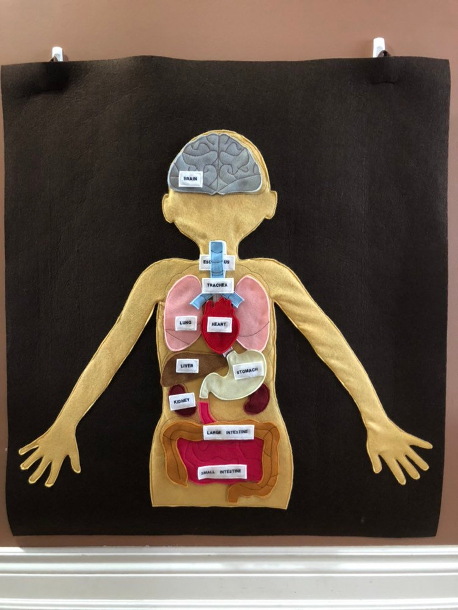 Felt Learning Wall of Human Body