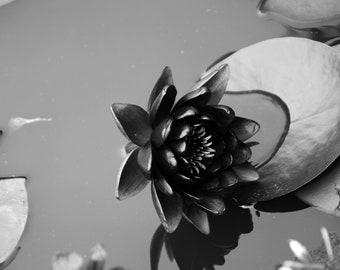 Black and white lotus flower photo to print