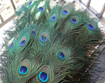 20-50-100-200Pcs/lot Top Quality Peacock Feathers,length 25-32 CM(10-13inches) beautiful natural peacock feather Diy jewelry Decorative Deco