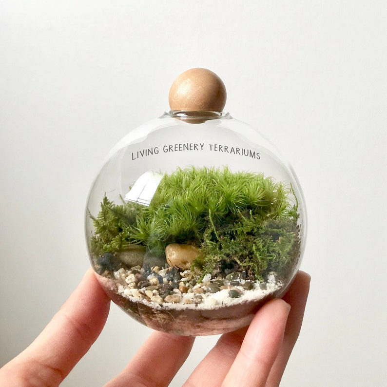 Mini Terrarium With Live Moss In Bubble Glass Vase Mini Etsy