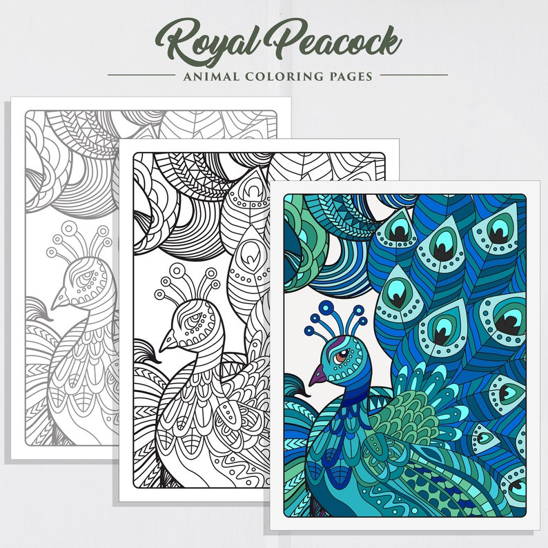 Royal Peacock Coloring Page Adult Coloring Pages Coloring Birds Printable Coloring Page Coloring For Adults Coloring Sheet Coloring
