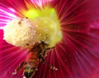 Pollen Bee