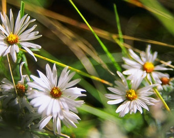 Little Wild Flowers, Nature Print, Wall Art, Landscape Photography, Photo, Print