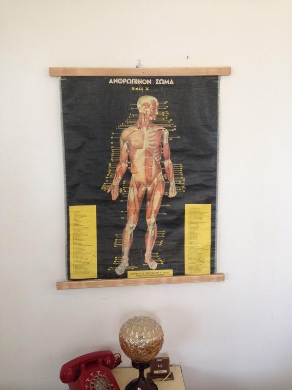Down Pull PosterRare Human Original AnatomyMedical School Anatomy Body Educational Antique Poster ChartVintage 7gIbyfYvm6