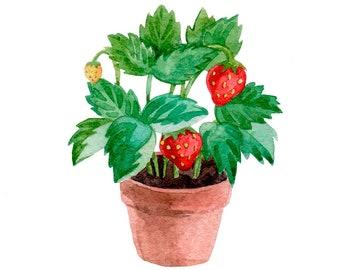Strawberry Plants Pot Original Watercolour Painting 40