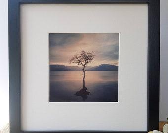 Framed Print of 'The Lonely Tree', Milarrochy Bay, Loch Lomond