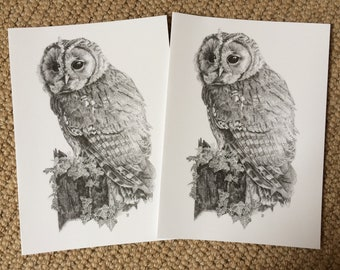 Tawny Owl Hand drawn wildlife cards, pack of two featuring a beautifully detailed pencil drawings - come with envelopes - note cards, Gifts